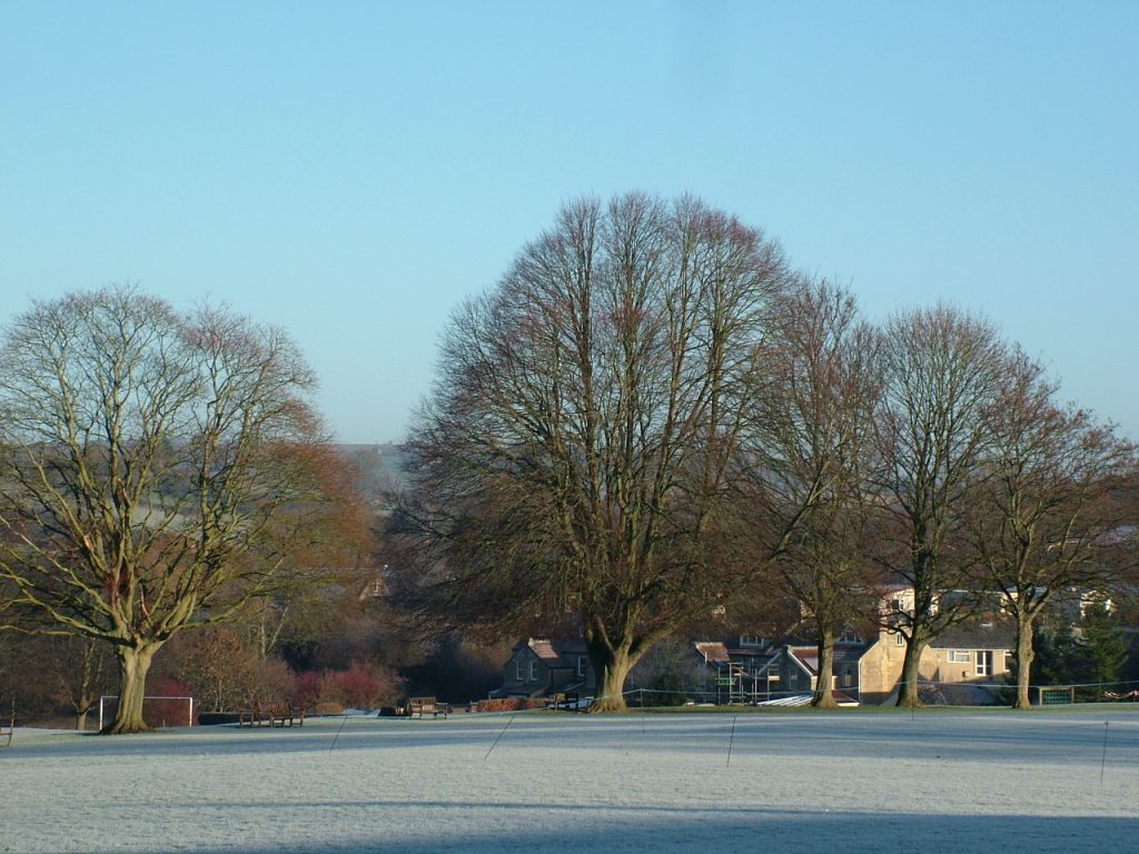 Frosted morning in Wiltshire field