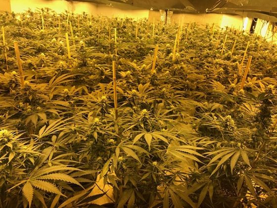 cannabis factory in nuclear bunker