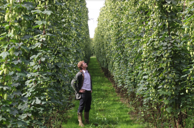 Alex Arkell selecting hops